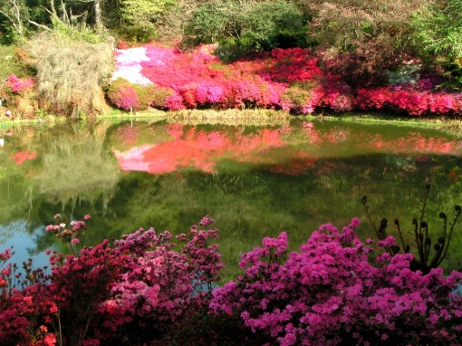 This view at Cheerio Gardens is one of the reasons why the azaleas across my dam had to be white!