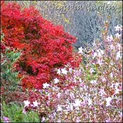 The autumn of the azaleas