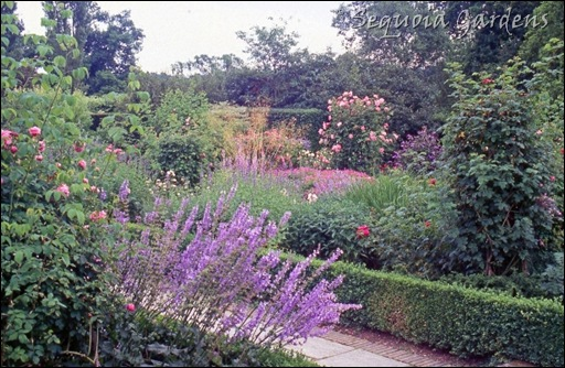 6 Varied abundance in the Rose Garden