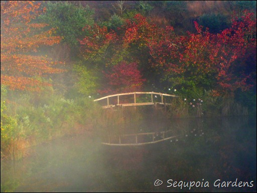 misty autumn bridge