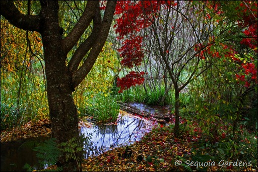 Weeping Cherry and Japanese Maple over the stream