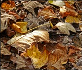5 Dappled light on fallen leaves