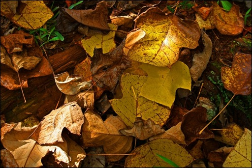 6 Dappled light on fallen leaves