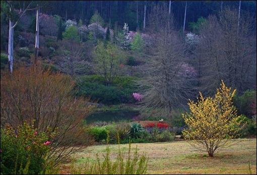 Spring from the veranda