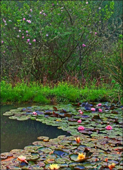 Waterlilies and roses