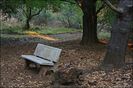 Bench at Quercus Corner