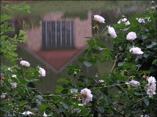 Reflection only across white rose 2