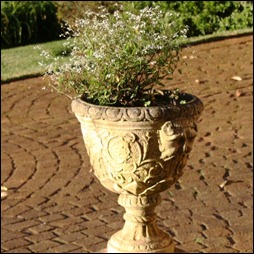 Francois' pot at entrance