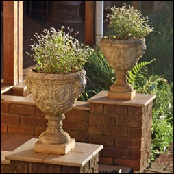 Francois' pots at entrance