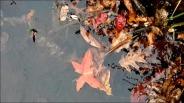 autumn-on-the-water_thumb.jpg